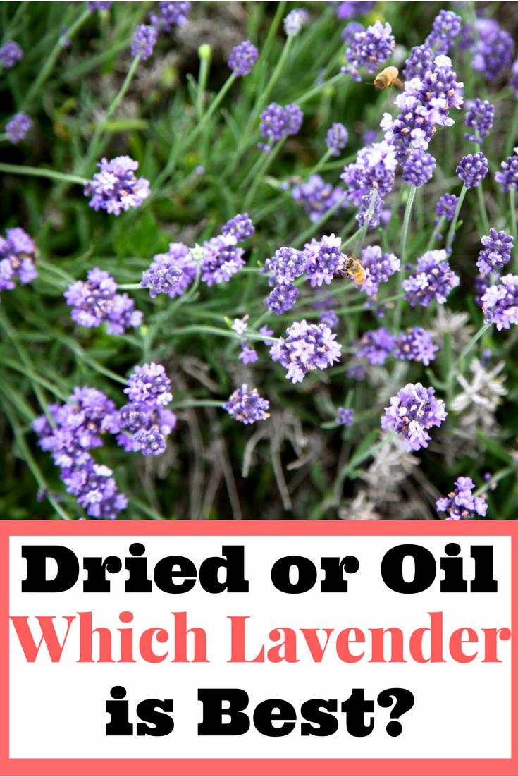 Find out if dried lavender or lavender oil is best to use.