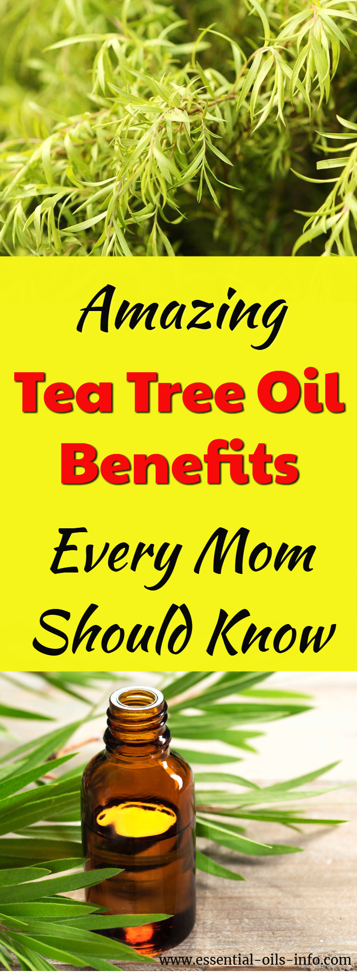 Find out the most amazing tea tree oil facts and get recipes, benefits and uses for tea tree essential oil.