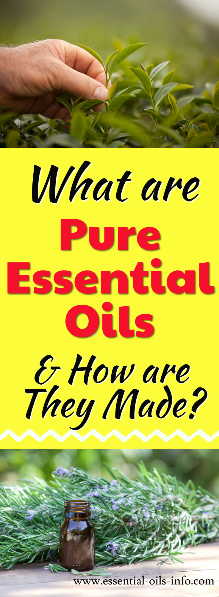 Find out what pure essential oils are and how they are made. Learn why it's important to get pure oils and how to avoid essential oils with chemical additives. Make sure you only use pure oils on your family members and pets!